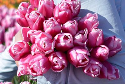 When should I plant tulip bulbs and daffodil bulbs?
