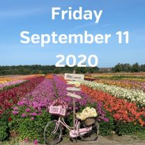 Visit dahlia fields 11 September 2020