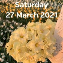Visit daffodil fields 27 March 2020