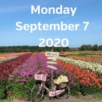 Visit dahlia fields 7 September 2020